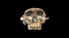 Arqueomanía - Dossier 1