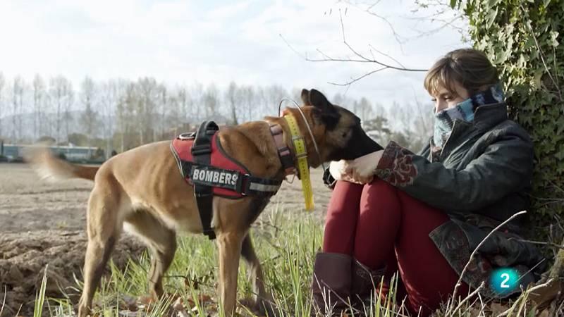 La meva mascota i jo - Entrena amb el teu gos