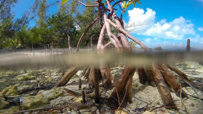Grandes documentales - Bahamas Azules: Manglares - ver ahora