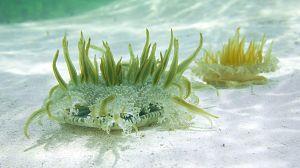 Bahamas azules: Coral