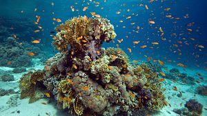 Bahamas azules: El país de las maravillas