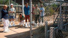 Sánchez y Merkel visitan el centro del Acebuche, en Doñana, dedicado a la conservación del lince ibérico