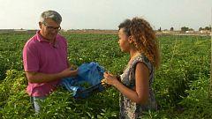 Aquí la tierra - El arroz veraniego de Murcia