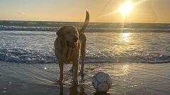 PACMA ha reivindicado llevar las mascotas a la playa