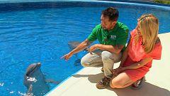 Aquí la tierra - Entre nutrias y delfines