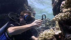 Bubbles - Mar Rojo Sur