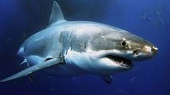 Otros documentales - Tiburones. Los cinco grandes