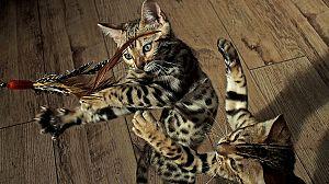 Mascotas: Criaturas juguetonas