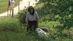 El escarabajo verde - Volver a lo salvaje. Los bisontes de Rumanía