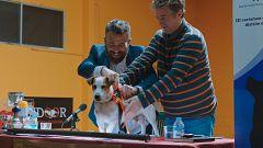 Sabuesos - Max gana el campeonato