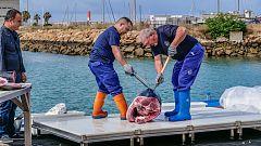 MasterChef Celebrity 3 - La maestría del ronqueo del atún