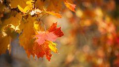 Llega el otoño tras un verano más caluroso de lo habitual