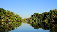 Grandes documentales - Brasil. Una historia natural: El bosque inundado