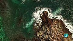 Escarabajo verde - Observadores del mar