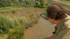 Aquí la tierra - Una selva en Castilla