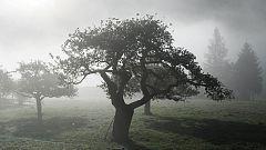 Posibilidad de lluvias fuertes en cualquier punto de la Península