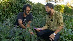 Aquí la Tierra - ¡Qué ricos los productos de la huerta asturiana!