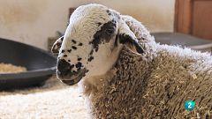 La meva mascota i jo - De visita a l'estable del Norit, el Jorfi, la Wilma i la Betty