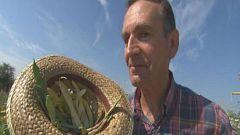 Aquí la Tierra - Aprendemos a cosechar judías verdes