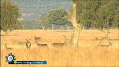 Para todos La 2 - Medio Ambiente - El Parque Nacional de Cabañeros