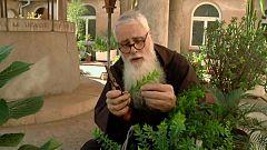 Aquí la Tierra - Plantas divinas y humanas