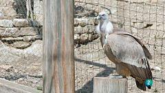 La meva mascota i jo - Les aus rapinyaires del Cim de les Àligues