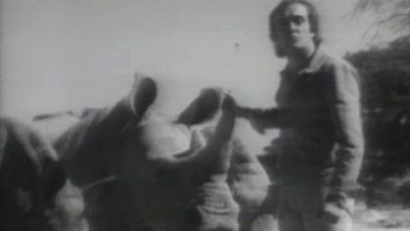 El planeta azul - El drama de los rinocerontes