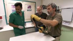 El escarabajo verde - Un negocio bestial