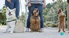 La meva mascota i jo - Com funciona una clínica veterinària