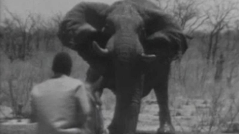 El planeta azul - El rodeo de los elefantes