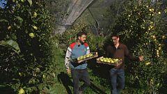Aquí la tierra - Las manzanas de Anciles