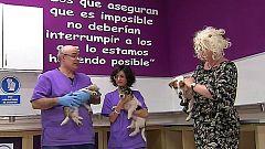 España Directo - 14/11/18