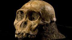 La humanidad surgió en varios luagares de África, no en un único punto, revela un estudio