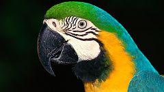 Grandes documentales - Latinoamérica salvaje: La Amazonia, una selva muchos mundos