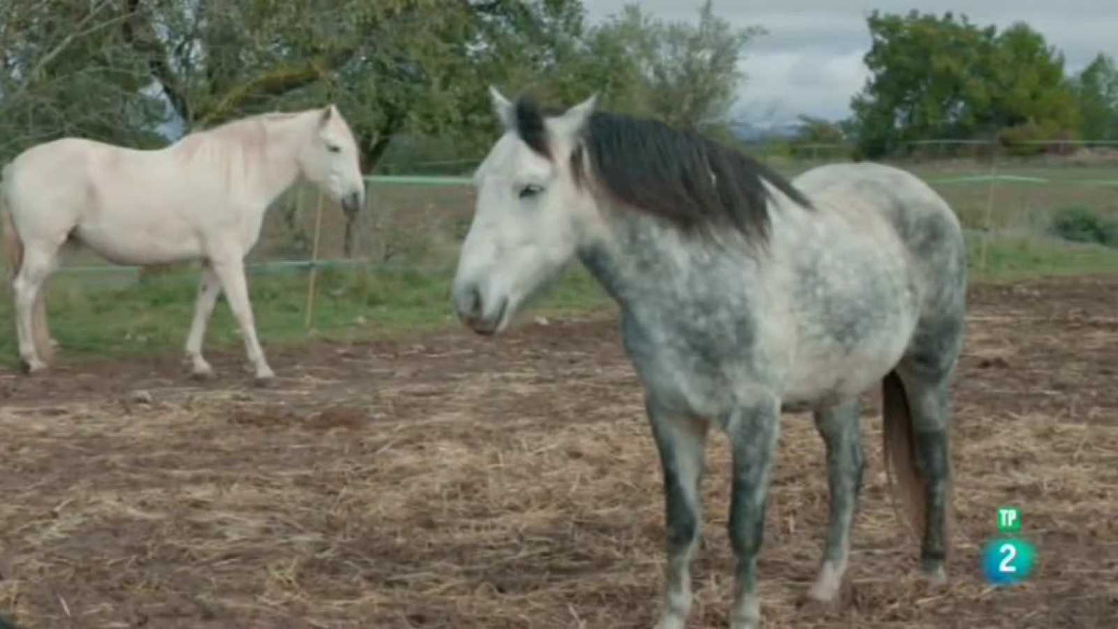 La meva mascota i jo - El refugi Cal Lari i la Protectora de Cavalls ADE