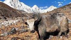 Otros documentales - Invierno en el Everest: La gran aventura - Everest sobrehumano