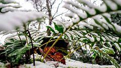 La nieve pone en aviso a 13 provincias pero solo León está en alerta naranja