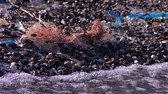 ¿Cuánto tiempo crees que tarda en descomponerse el plástico?
