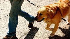 Perros guía en TVE