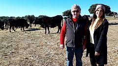 Aquí la tierra - La vaca sayaguesa es toda una superviviente
