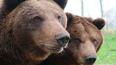 Parque del Hosquillo, naturaleza y reino animal