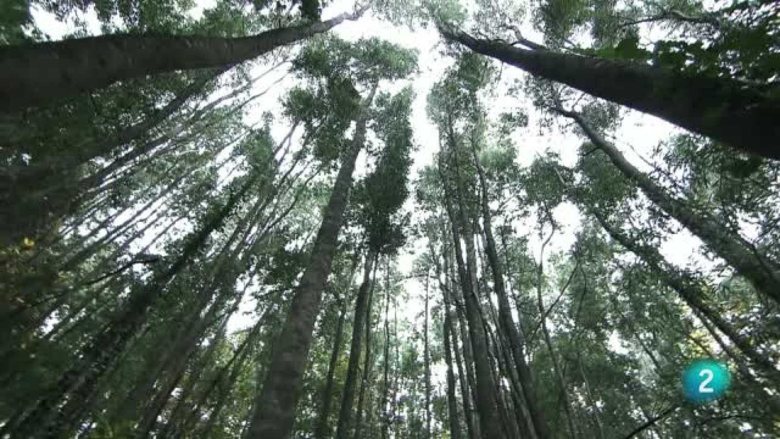 El escarabajo verde - Tres montes vecinales - Avance