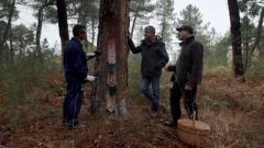 El señor de los bosques - Cuéllar. Segovia