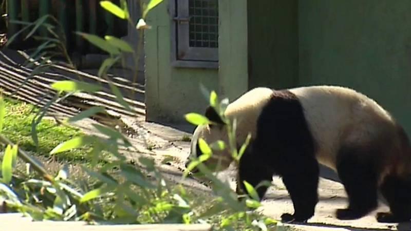 Mujeres adiestradoras de animales salvajes y veterinarias son mayoría en el zoo de Madrid