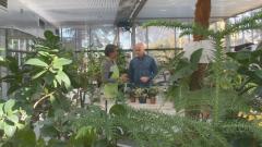 Aquí la tierra - De una planta, una nueva vida