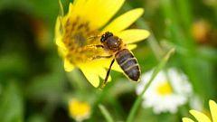 Fuenlabrada de los Montes, el pueblo de las abejas