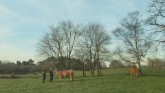 Aquí la tierra - Miss vaca 2019