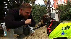 España Directo -  Perros potencialmente peligrosos, los más abandonados