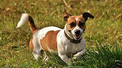 La Mañana - En un mundo de perros: Dakota, la perrita temerosa