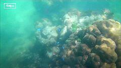 Viveros de coral para conservar arrecifes
